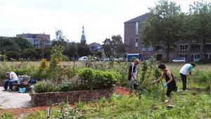 Stadslandbouw: nieuwe ontmoetingen in een groene buurt